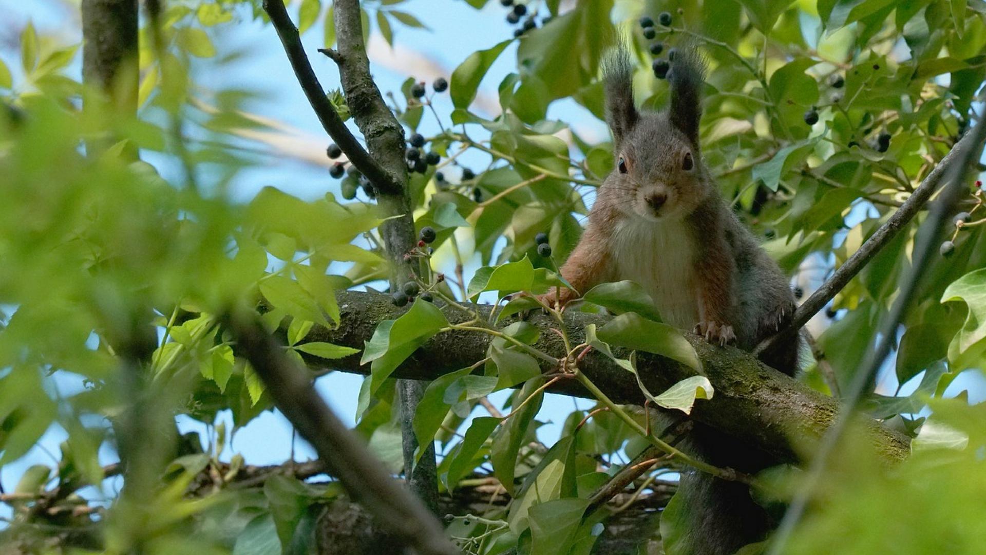 El Medio Ambiente: Cuidar De Los Animales Es Cuidar Del Medioambiente