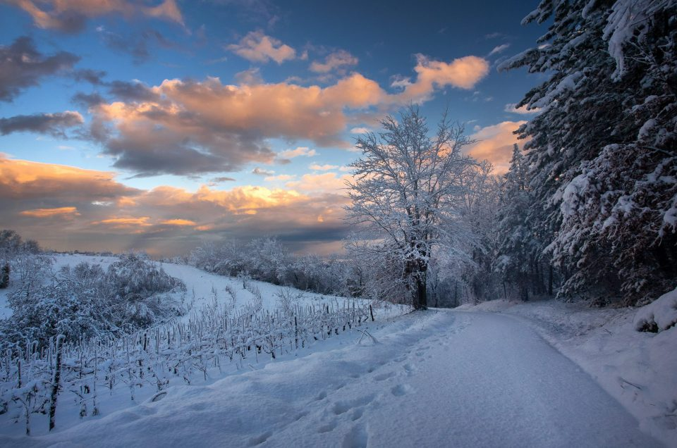 breathtaking-view-pathway-trees-covered-snow-gleaming-cloudy-sky-croatia-min